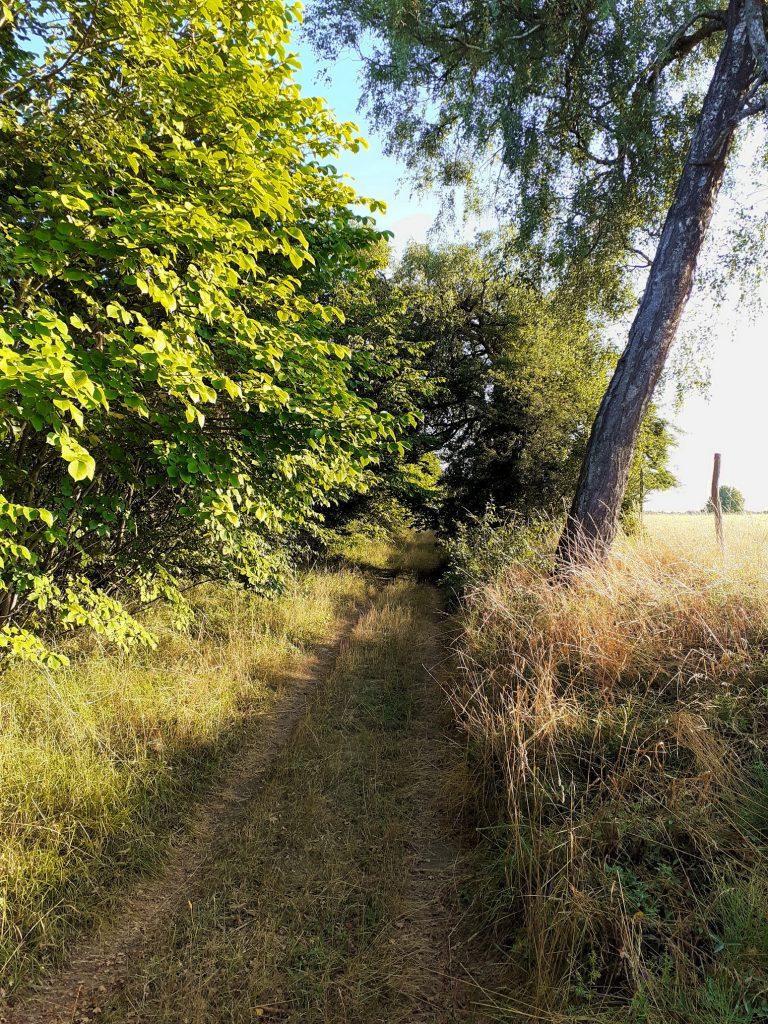 Droga polna Kiełpin - Polnica